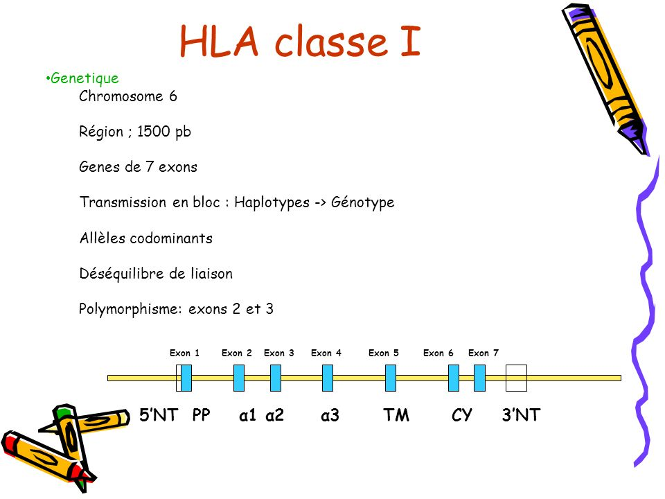 Genetique Chromosome 6 Région ; 1500 pb Genes de 7 exons Transmission en bloc : Haplotypes -> Génotype Allèles codominants Déséquilibre de liaison Pol
