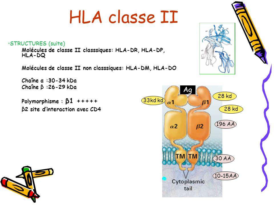 STRUCTURES (suite) Molécules de classe II classsiques: HLA-DR, HLA-DP, HLA-DQ Molécules de classe II non classsiques: HLA-DM, HLA-DO Chaîne α :30-34 kDa Chaîne β :26-29 kDa Polymorphisme : β1 +++++ β2 site dinteraction avec CD4 HLA classe II Ag 28 kd 33kd kd 196 AA 30 AA 10-15AA