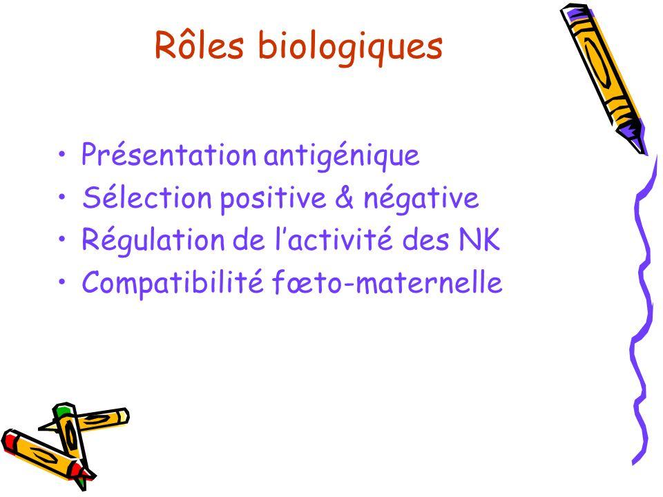 Rôles biologiques Présentation antigénique Sélection positive & négative Régulation de lactivité des NK Compatibilité fœto-maternelle