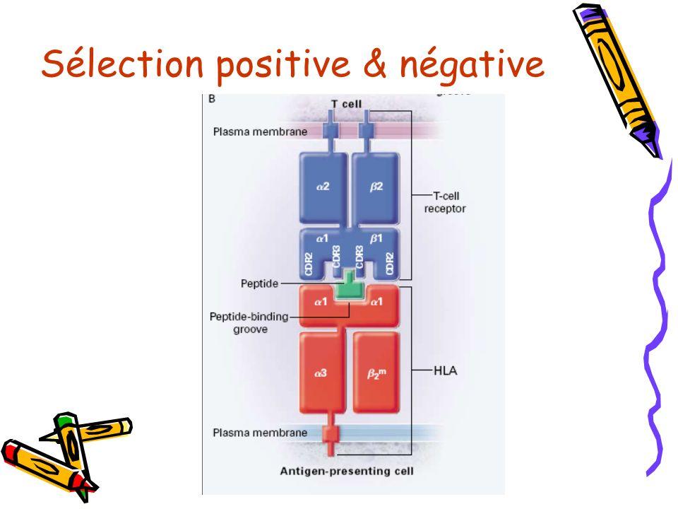 Sélection positive & négative