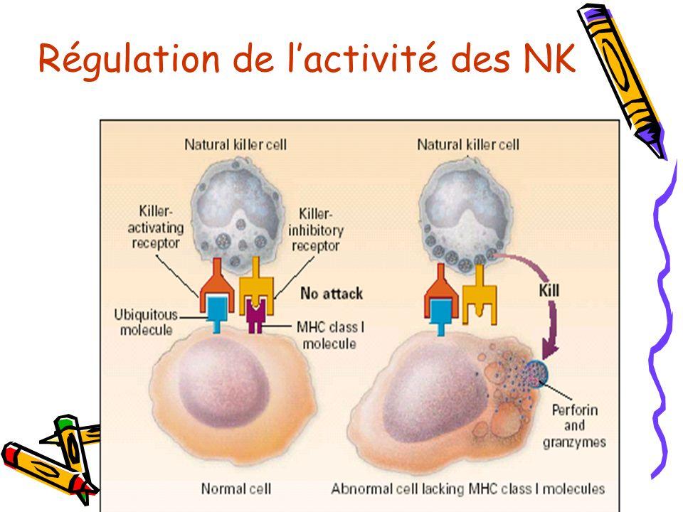 Régulation de lactivité des NK