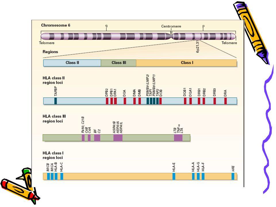 HLA : nomenclature Sérologie et génotypage