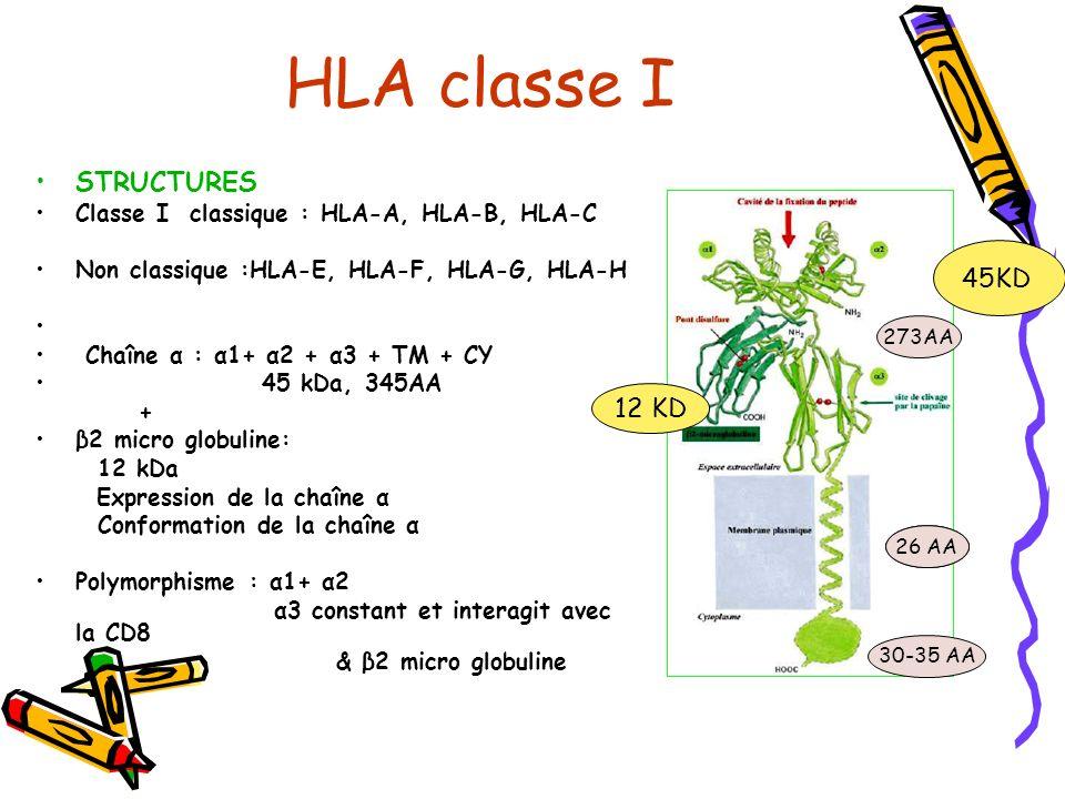 HLA classe I Cavité de liaison au peptide: Fermée et fixe 1 Nanopeptide Résidus dancrage aux extrémités Localisation : sur presque toutes les cellules nucléées Au maxi 6 molécules différentes chez un individu : 2A, 2B et 2C par ; IFN; IL1, IL4