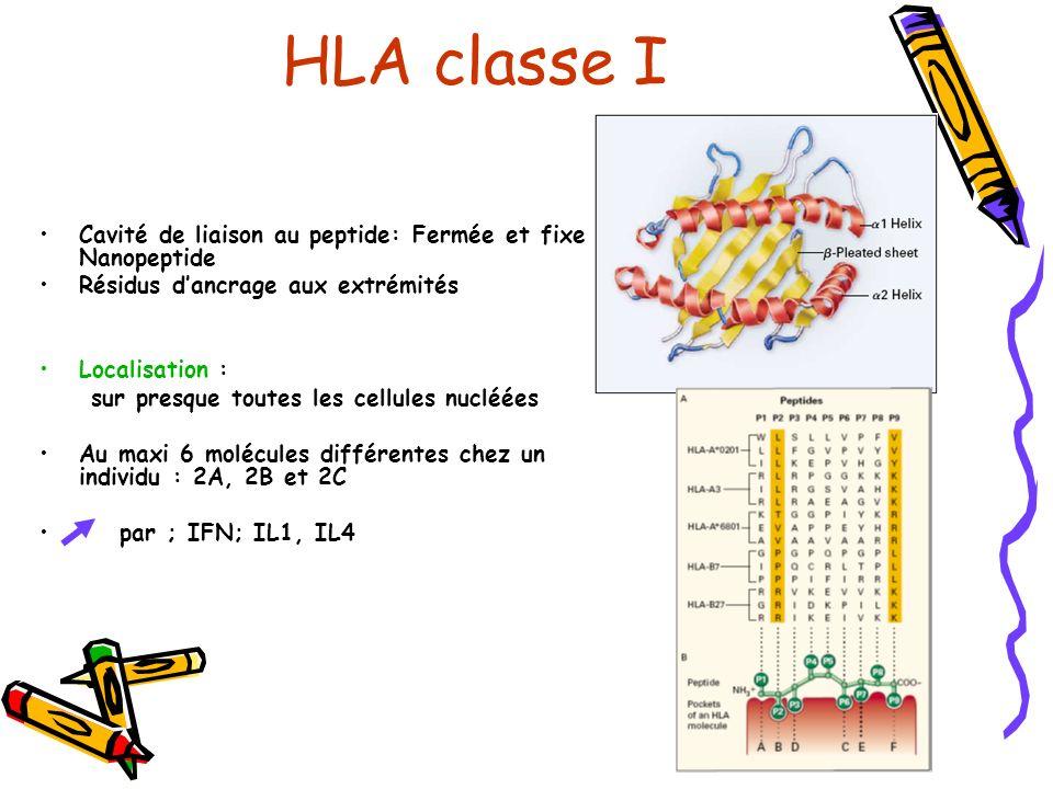 HLA classe I Cavité de liaison au peptide: Fermée et fixe 1 Nanopeptide Résidus dancrage aux extrémités Localisation : sur presque toutes les cellules