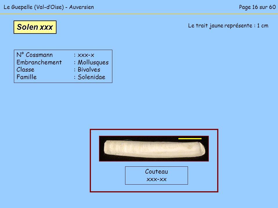 Le Guepelle (Val-dOise) - Auversien Couteau xxx-xx Le trait jaune représente : 1 cm Solen xxx N° Cossmann : xxx-x Embranchement : Mollusques Classe :