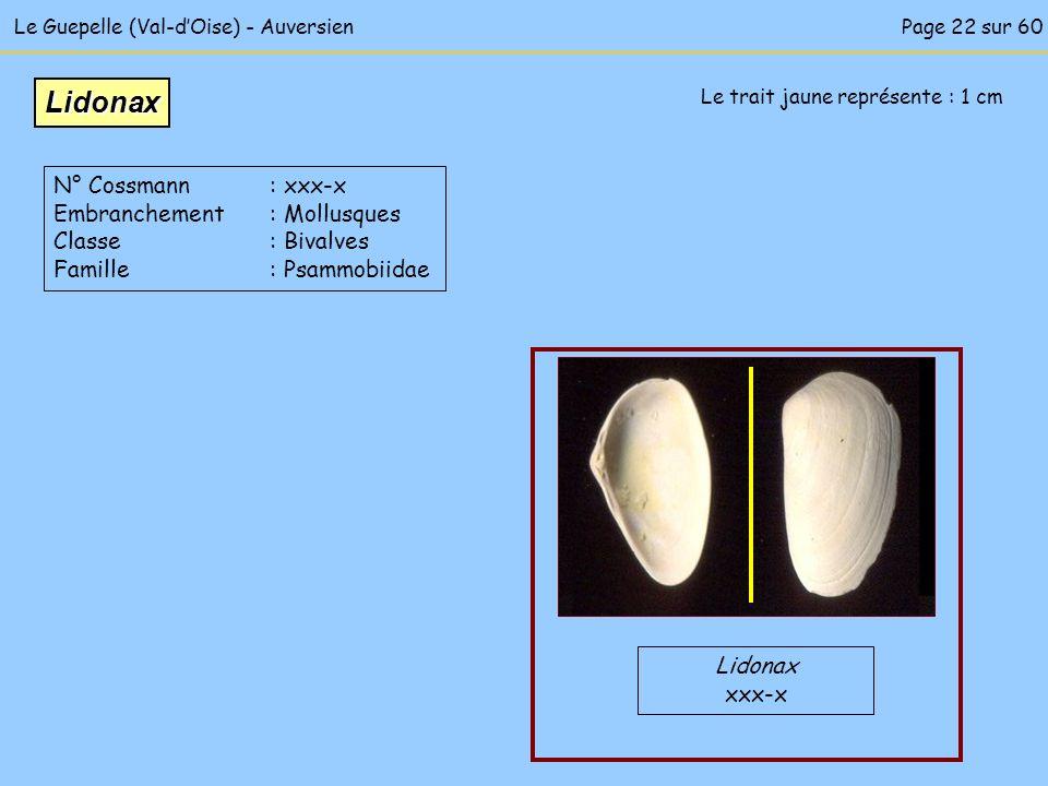 Le Guepelle (Val-dOise) - Auversien Le trait jaune représente : 1 cm Lidonax xxx-x Lidonax N° Cossmann : xxx-x Embranchement : Mollusques Classe : Biv