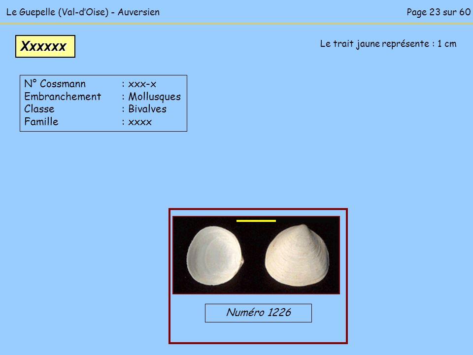 Le Guepelle (Val-dOise) - Auversien Le trait jaune représente : 1 cm Numéro 1226 Xxxxxx N° Cossmann : xxx-x Embranchement : Mollusques Classe : Bivalv
