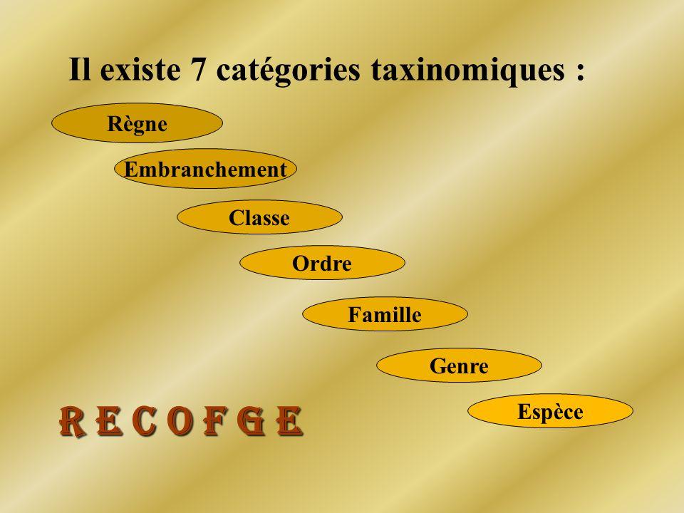 Il existe 7 catégories taxinomiques : Règne Embranchement Ordre Classe Famille Genre Espèce R E C O F G E