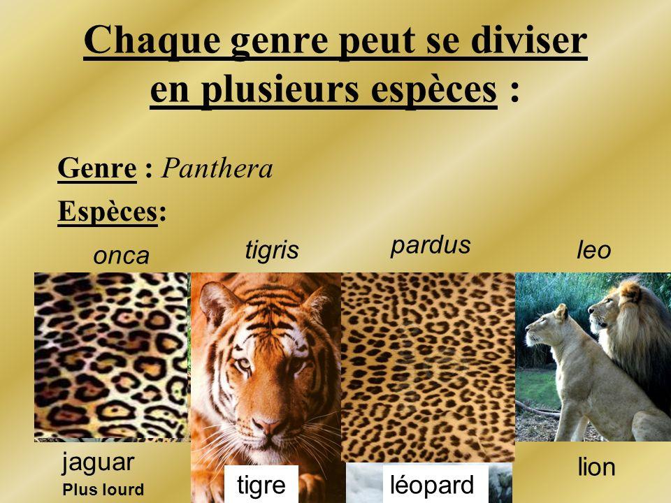 Chaque genre peut se diviser en plusieurs espèces : Genre : Panthera Espèces: onca leotigris pardus léopard jaguar tigre lion Plus lourd
