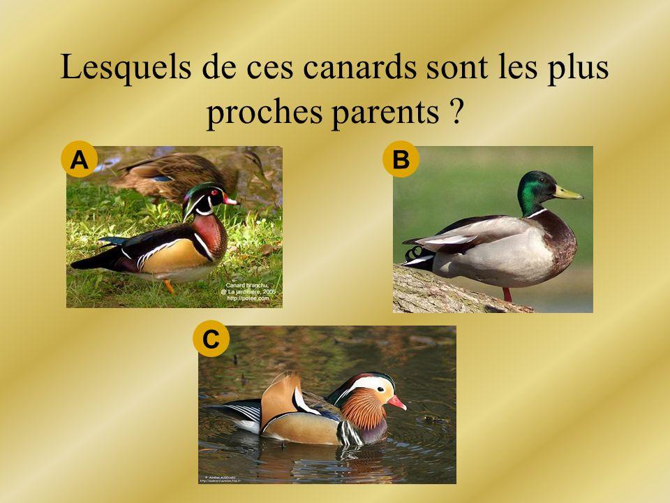 Lesquels de ces canards sont les plus proches parents ? A C B