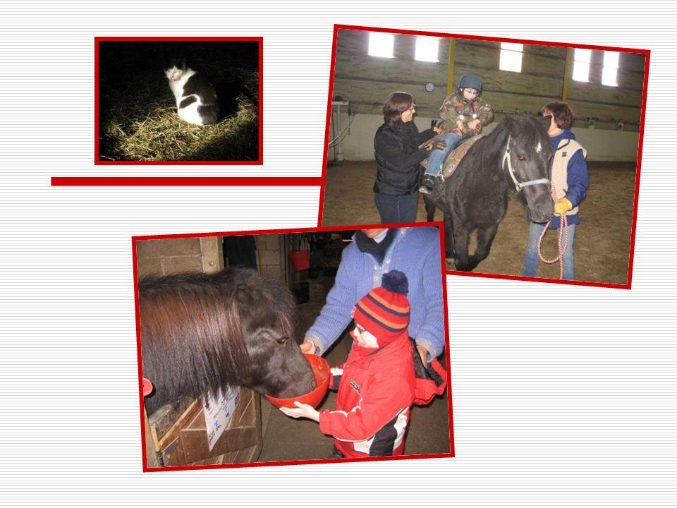 Merci à tous nos partenaires pour avoir permis la réalisation du projet « le petit cheval blanc » en 2008, 2009 et 2010 Le programme du goût de vivre (CLSC Villeray-Petite-Patrie) La Fondation de lécole Gadbois Mme Habiba Haïdaoui LAssociation des TED de Montréal et les parents de nos élèves
