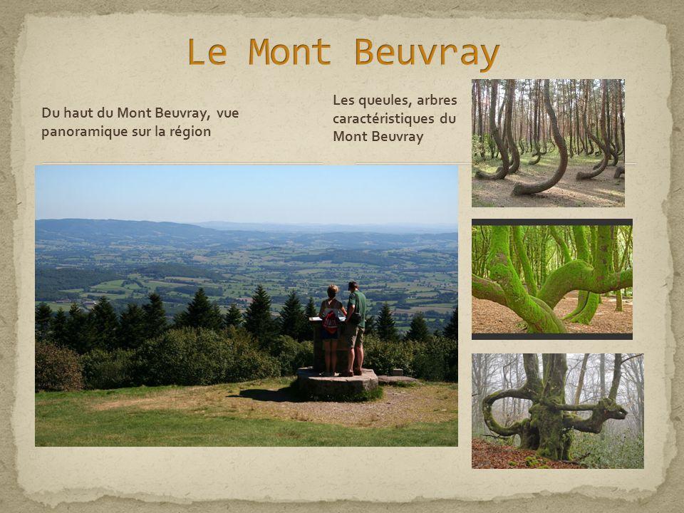 Du haut du Mont Beuvray, vue panoramique sur la région Les queules, arbres caractéristiques du Mont Beuvray