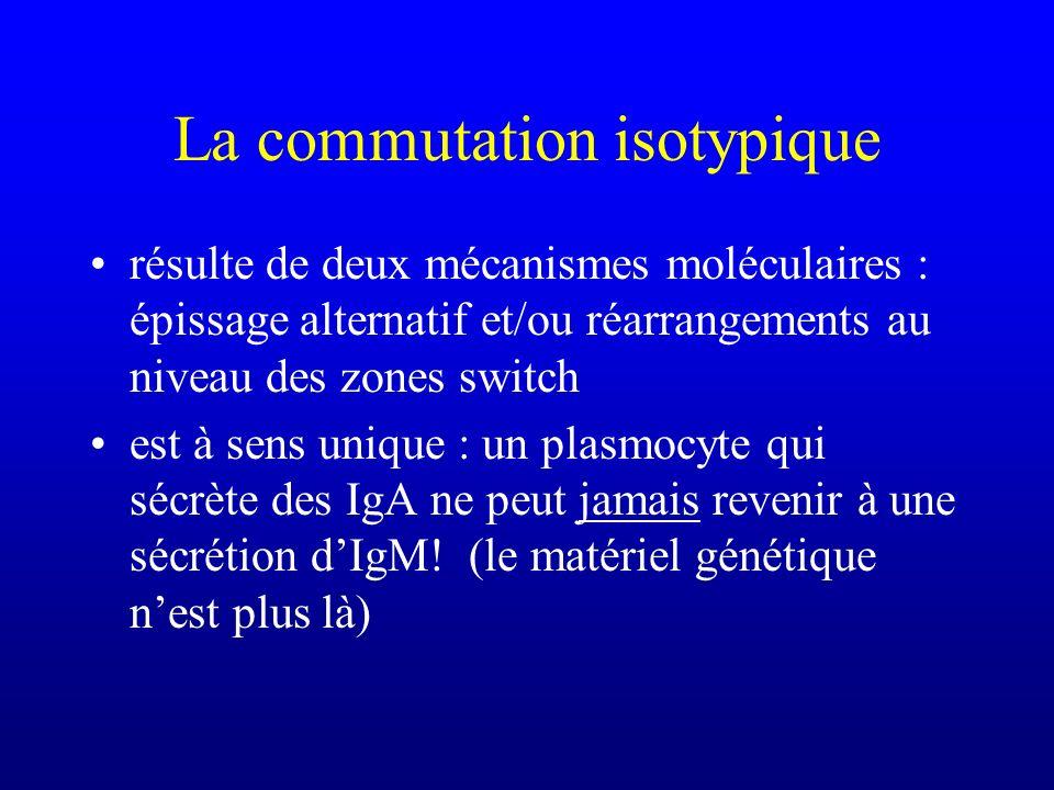 La commutation isotypique résulte de deux mécanismes moléculaires : épissage alternatif et/ou réarrangements au niveau des zones switch est à sens uni