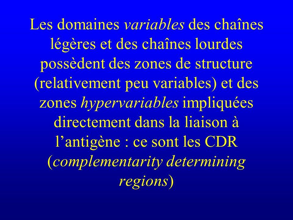 Les domaines variables des chaînes légères et des chaînes lourdes possèdent des zones de structure (relativement peu variables) et des zones hypervari