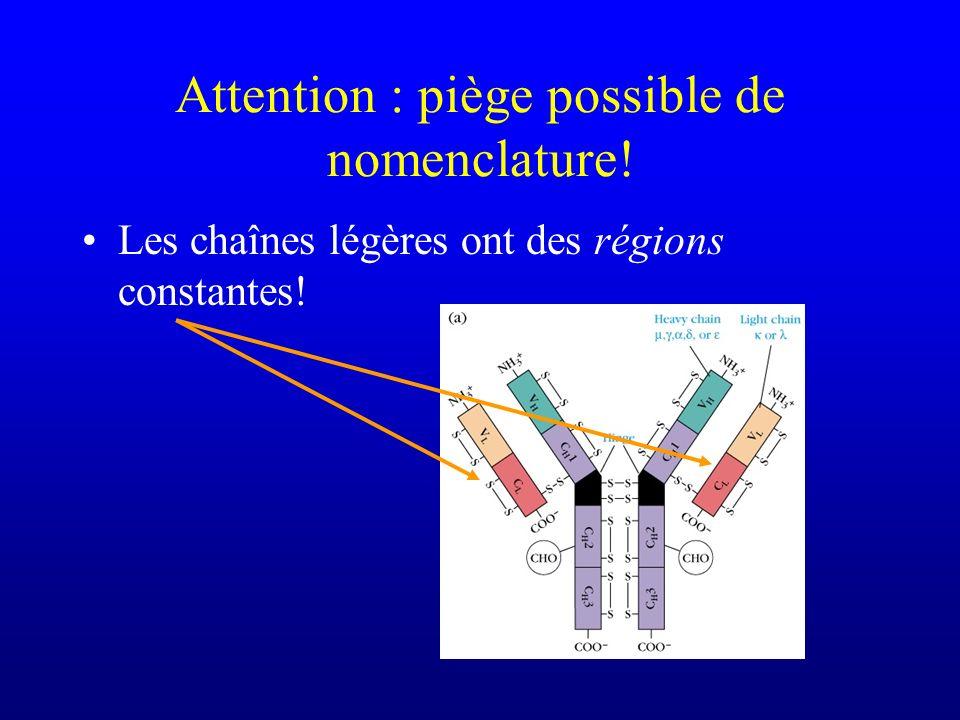 Attention : piège possible de nomenclature! Les chaînes légères ont des régions constantes!