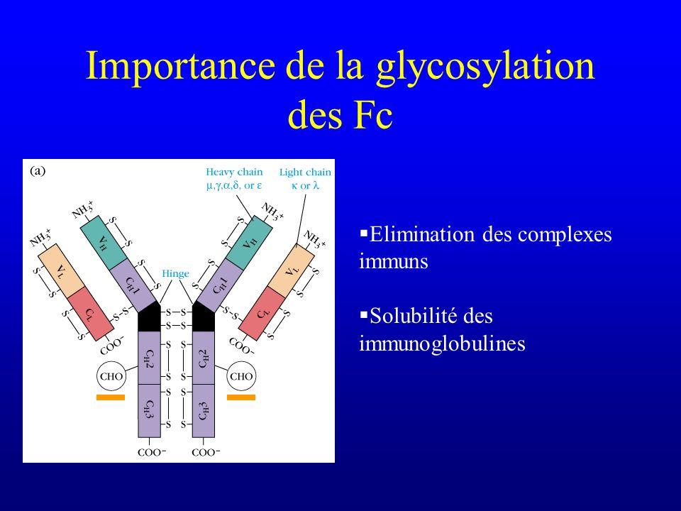 Importance de la glycosylation des Fc Elimination des complexes immuns Solubilité des immunoglobulines