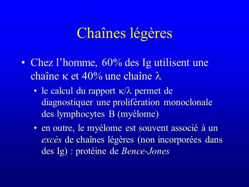 Chaînes légères Chez lhomme, 60% des Ig utilisent une chaîne et 40% une chaîne le calcul du rapport / permet de diagnostiquer une prolifération monocl