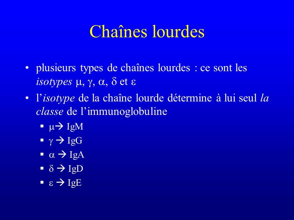 Chaînes lourdes plusieurs types de chaînes lourdes : ce sont les isotypes,,, et lisotype de la chaîne lourde détermine à lui seul la classe de limmuno