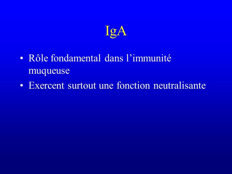 IgA Rôle fondamental dans limmunité muqueuse Exercent surtout une fonction neutralisante