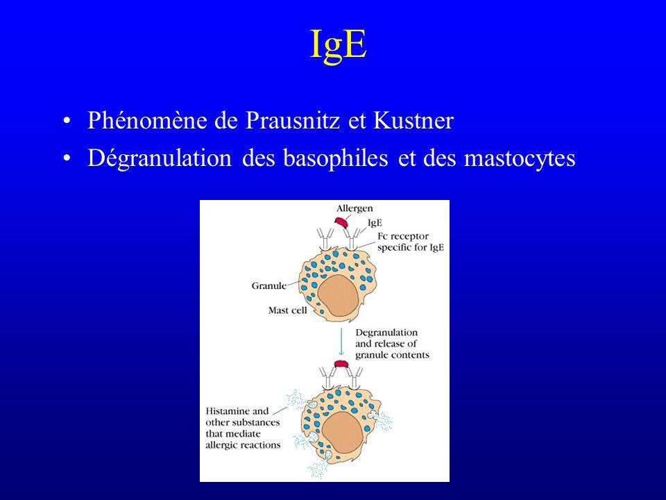 IgE Phénomène de Prausnitz et Kustner Dégranulation des basophiles et des mastocytes
