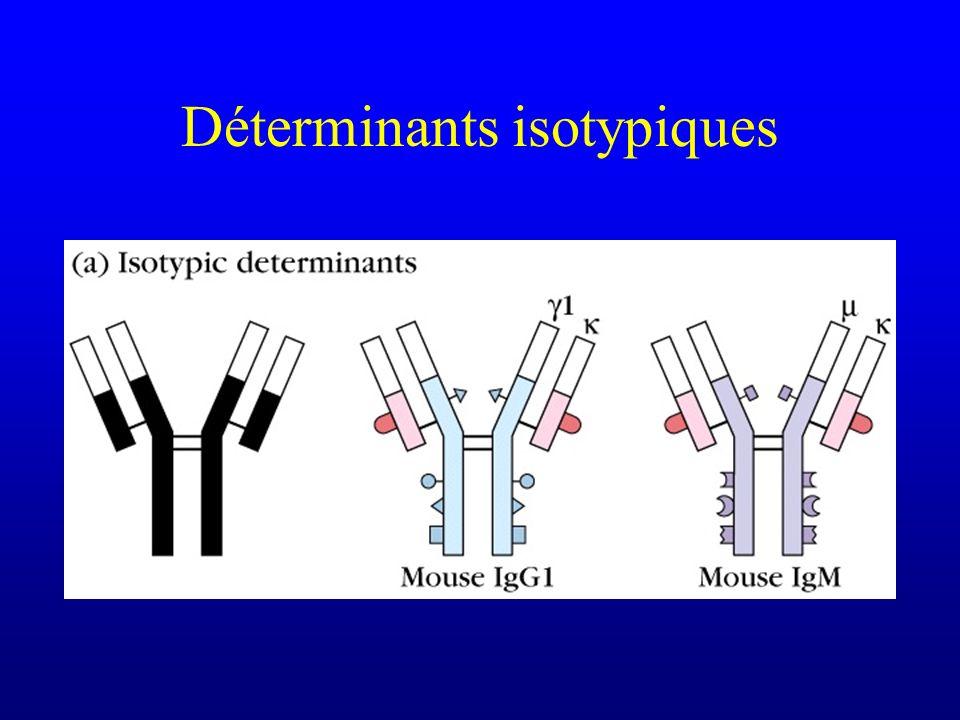 Déterminants isotypiques