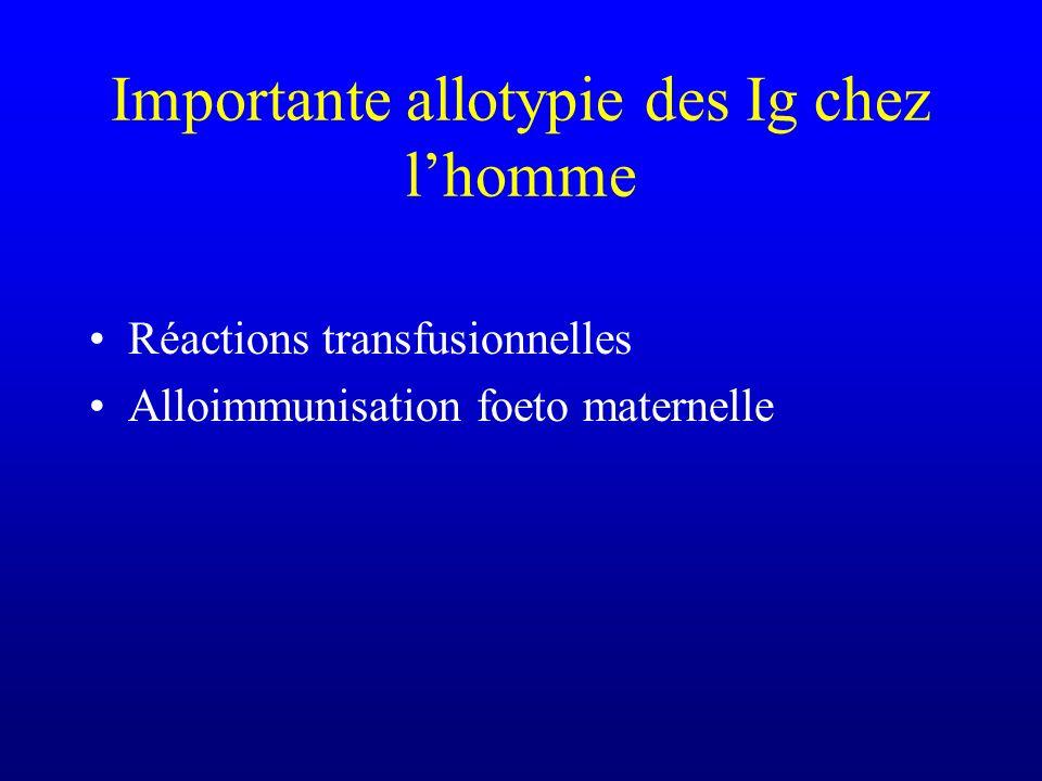 Importante allotypie des Ig chez lhomme Réactions transfusionnelles Alloimmunisation foeto maternelle