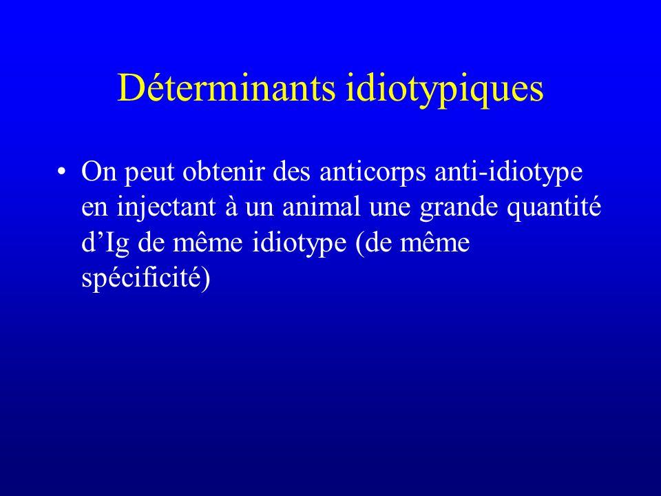 Déterminants idiotypiques On peut obtenir des anticorps anti-idiotype en injectant à un animal une grande quantité dIg de même idiotype (de même spéci
