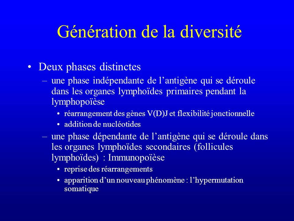 Génération de la diversité Deux phases distinctes –une phase indépendante de lantigène qui se déroule dans les organes lymphoïdes primaires pendant la