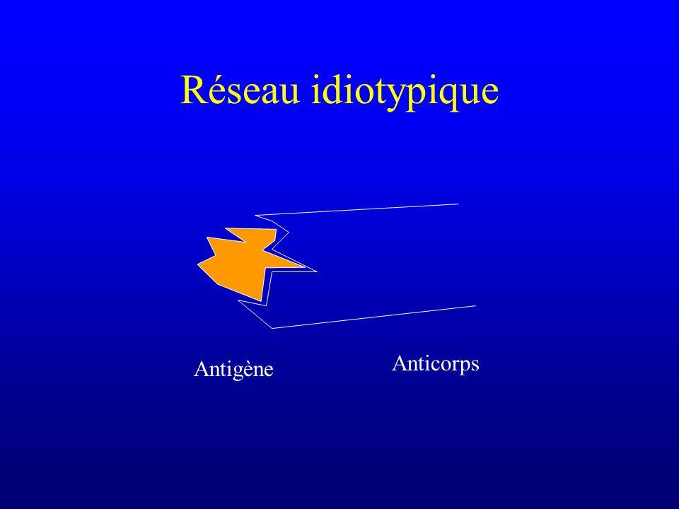 Réseau idiotypique Antigène Anticorps