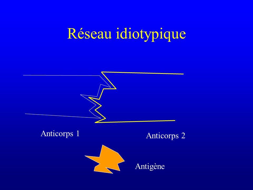 Réseau idiotypique Anticorps 1 Anticorps 2 Antigène