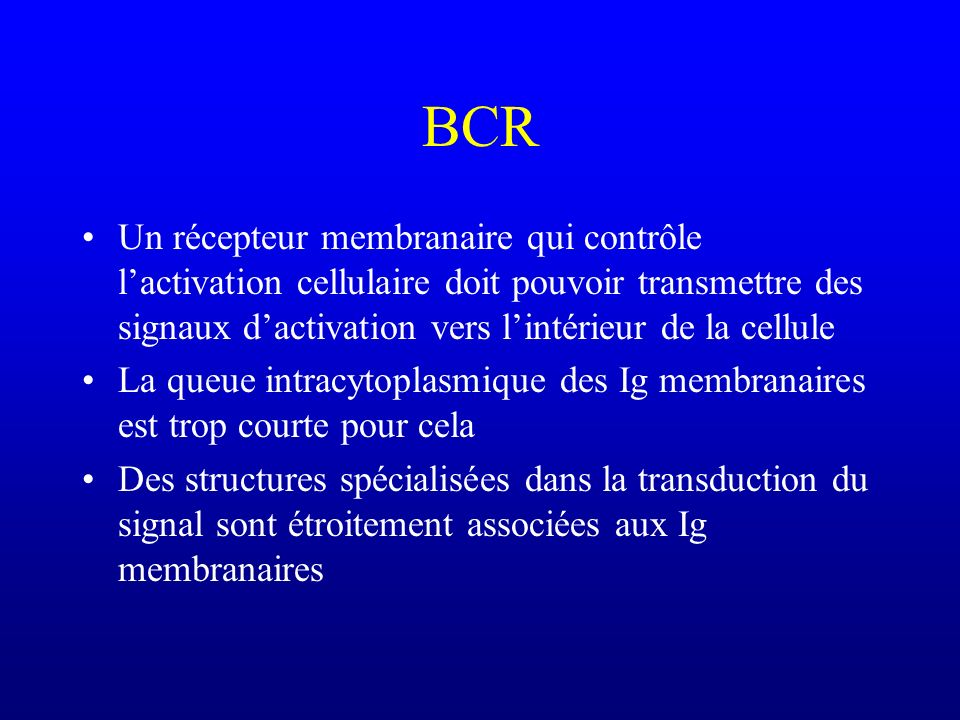 BCR Un récepteur membranaire qui contrôle lactivation cellulaire doit pouvoir transmettre des signaux dactivation vers lintérieur de la cellule La que