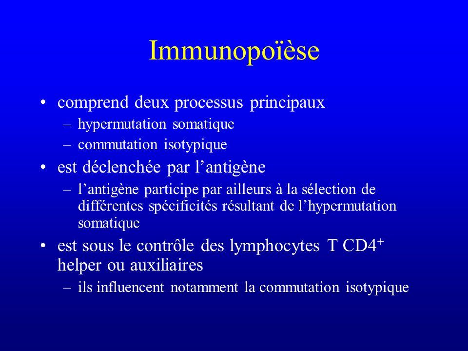 Immunopoïèse comprend deux processus principaux –hypermutation somatique –commutation isotypique est déclenchée par lantigène –lantigène participe par