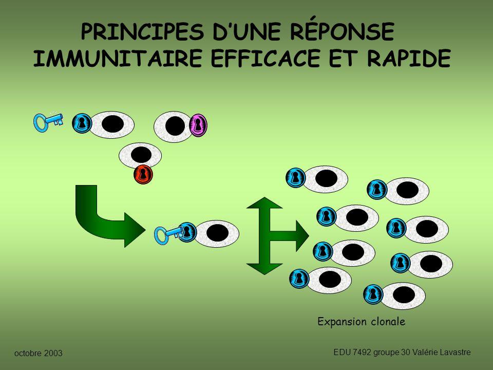octobre 2003 EDU 7492 groupe 30 Valérie Lavastre PRINCIPES DUNE RÉPONSE IMMUNITAIRE EFFICACE ET RAPIDE Expansion clonale