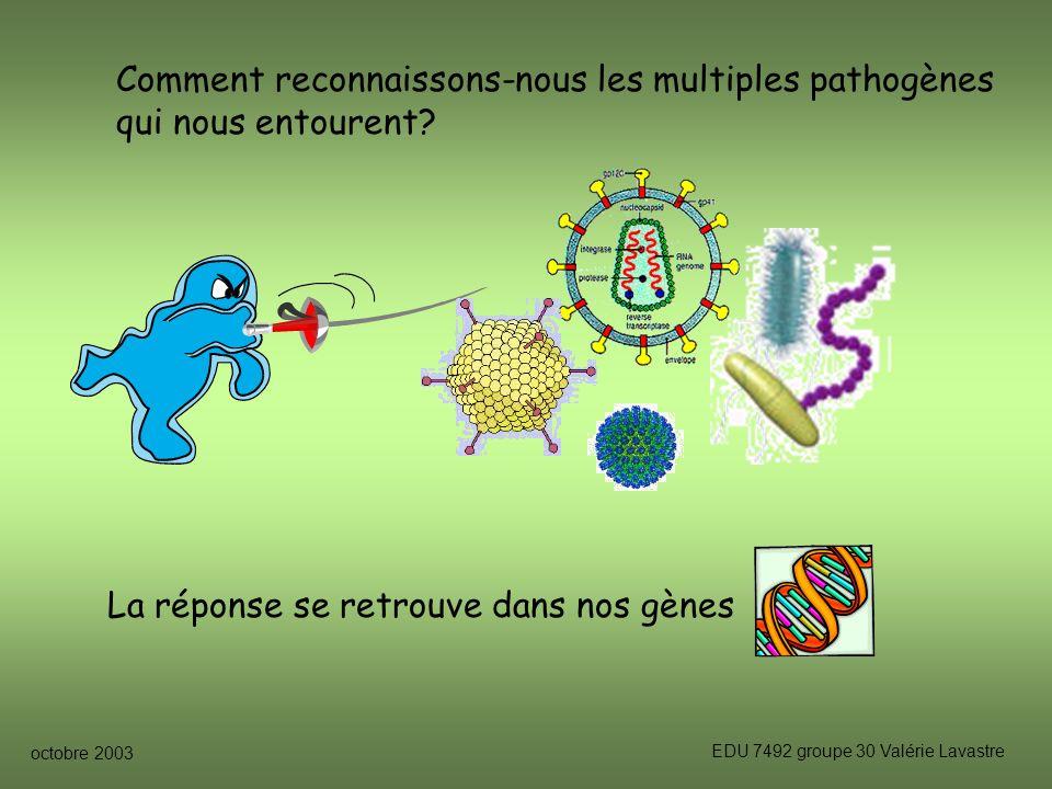 octobre 2003 EDU 7492 groupe 30 Valérie Lavastre Comment reconnaissons-nous les multiples pathogènes qui nous entourent.