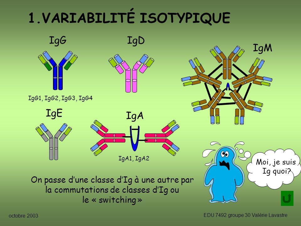 octobre 2003 EDU 7492 groupe 30 Valérie Lavastre IgM IgD IgE 1.VARIABILITÉ ISOTYPIQUE Moi, je suis Ig quoi.