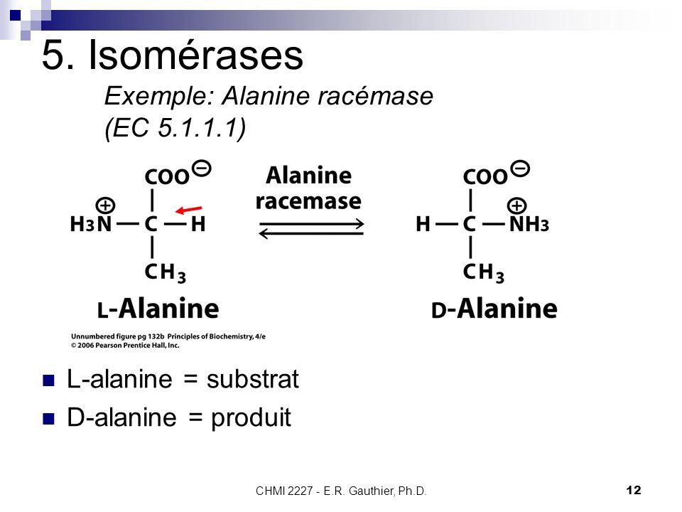 CHMI 2227 - E.R. Gauthier, Ph.D.12 5. Isomérases Exemple: Alanine racémase (EC 5.1.1.1) L-alanine = substrat D-alanine = produit