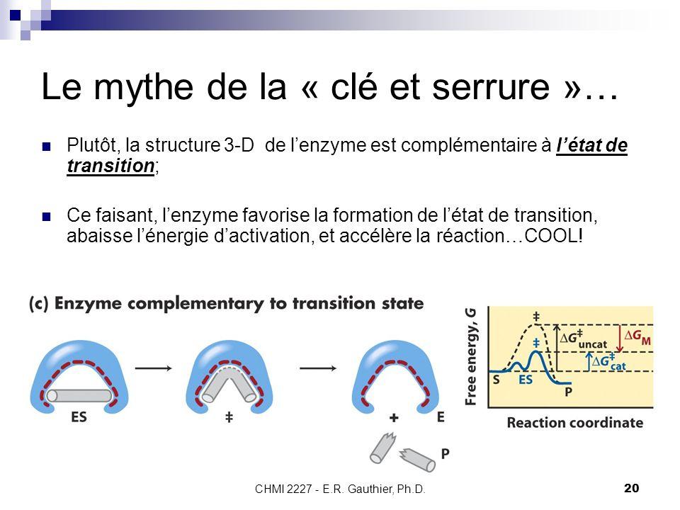 CHMI 2227 - E.R. Gauthier, Ph.D.20 Le mythe de la « clé et serrure »… Plutôt, la structure 3-D de lenzyme est complémentaire à létat de transition; Ce