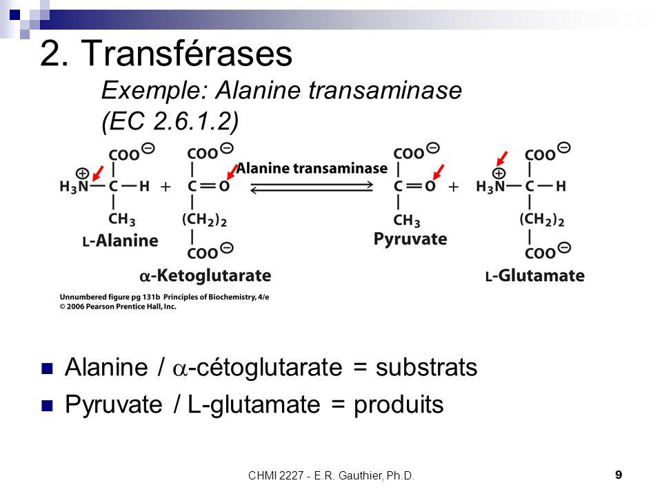 CHMI 2227 - E.R. Gauthier, Ph.D.9 2. Transférases Exemple: Alanine transaminase (EC 2.6.1.2) Alanine / -cétoglutarate = substrats Pyruvate / L-glutama