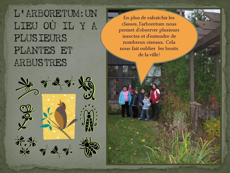 En plus de rafraîchir les classes, larboretum nous permet dobserver plusieurs insectes et dentendre de nombreux oiseaux.