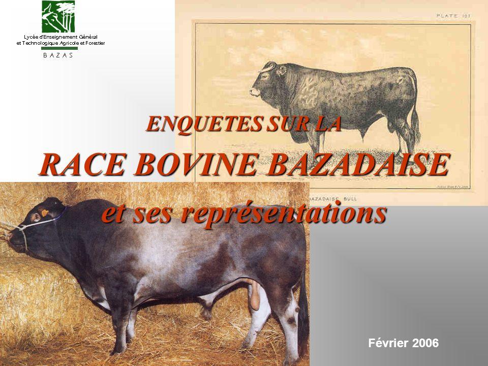 Février 2006 ENQUETES SUR LA RACE BOVINE BAZADAISE et ses représentations