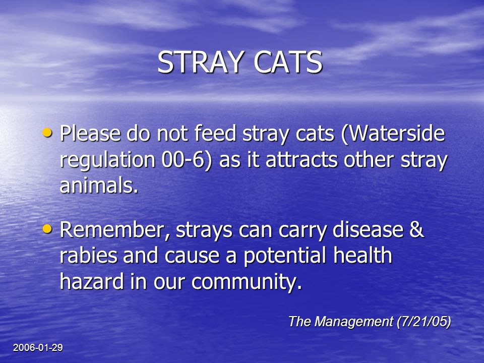 2006-01-29 STRAY CATS Please do not feed stray cats (Waterside regulation 00-6) as it attracts other stray animals.