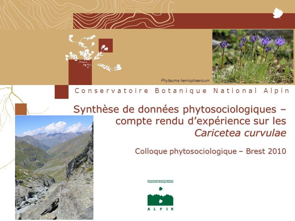 Synthèse de données phytosociologiques – compte rendu dexpérience sur les Caricetea curvulae Colloque phytosociologique – Brest 2010 C o n s e r v a t o i r e B o t a n i q u e N a t i o n a l A l p i n Phyteuma hemisphaericum