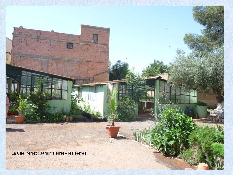La Cité Perret : Jardin Perret – les serres.