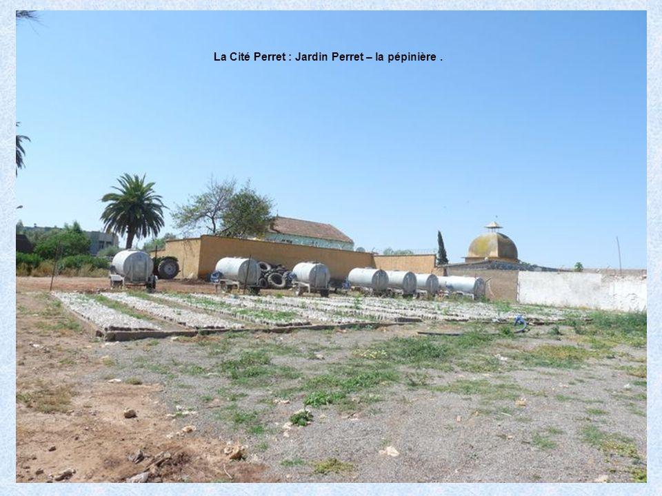 La Cité Perret : Jardin Perret – Intérieur dune serre.
