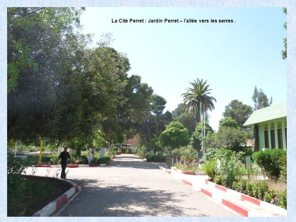 La Cité Perret : Jardin Perret – la fontaine.