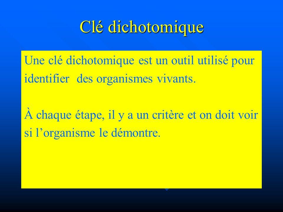 Clé dichotomique Une clé dichotomique est un outil utilisé pour identifier des organismes vivants. À chaque étape, il y a un critère et on doit voir s
