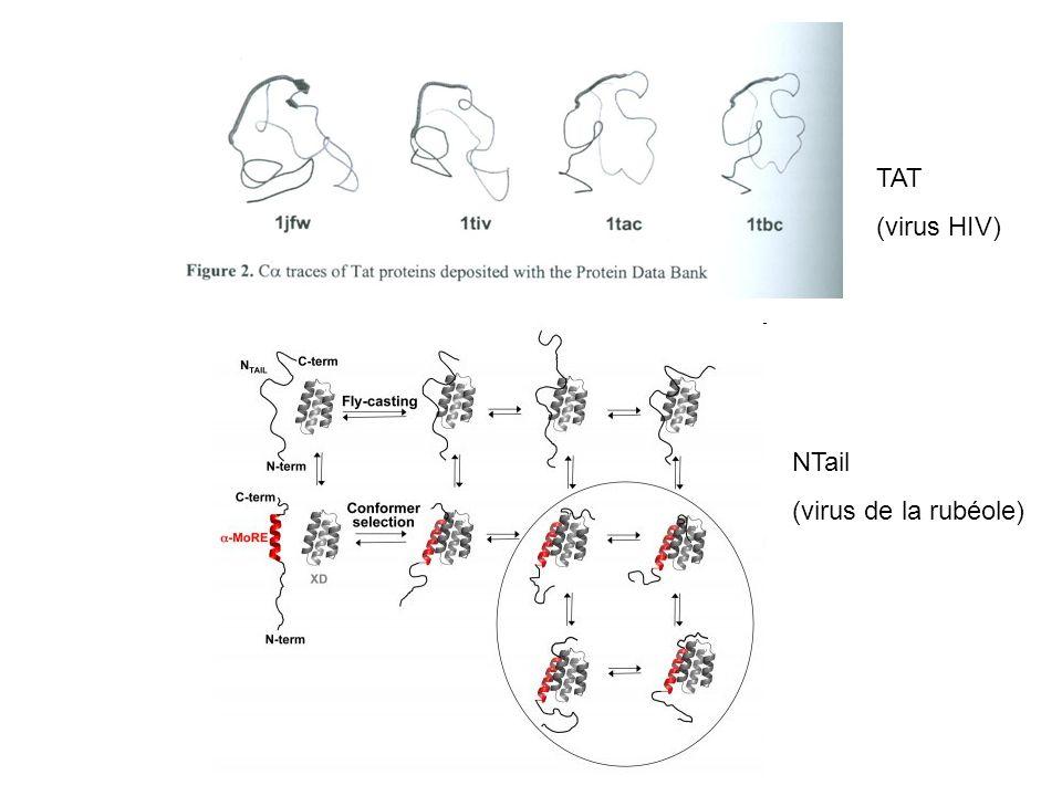 TAT (virus HIV) NTail (virus de la rubéole)