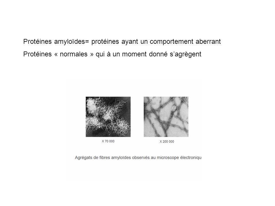 Protéines amyloïdes= protéines ayant un comportement aberrant Protéines « normales » qui à un moment donné sagrègent