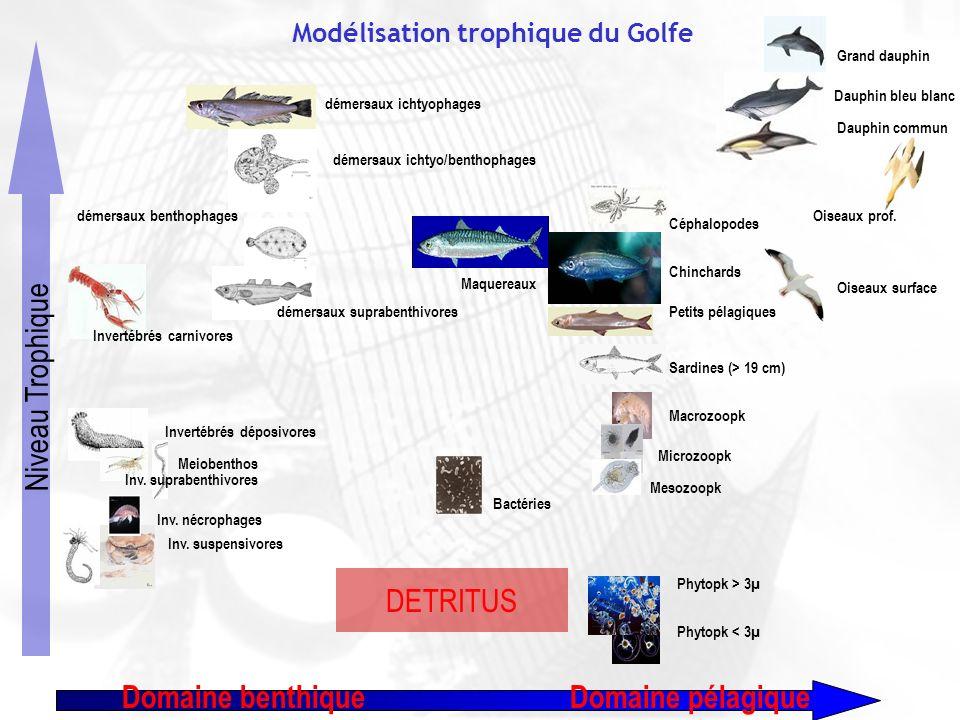 8e forum halieumétrique - Aquarium de La Rochelle, 19-21 juin 2007 Modélisation trophique du Golfe Bactéries Sardines (> 19 cm) Petits pélagiques Chin