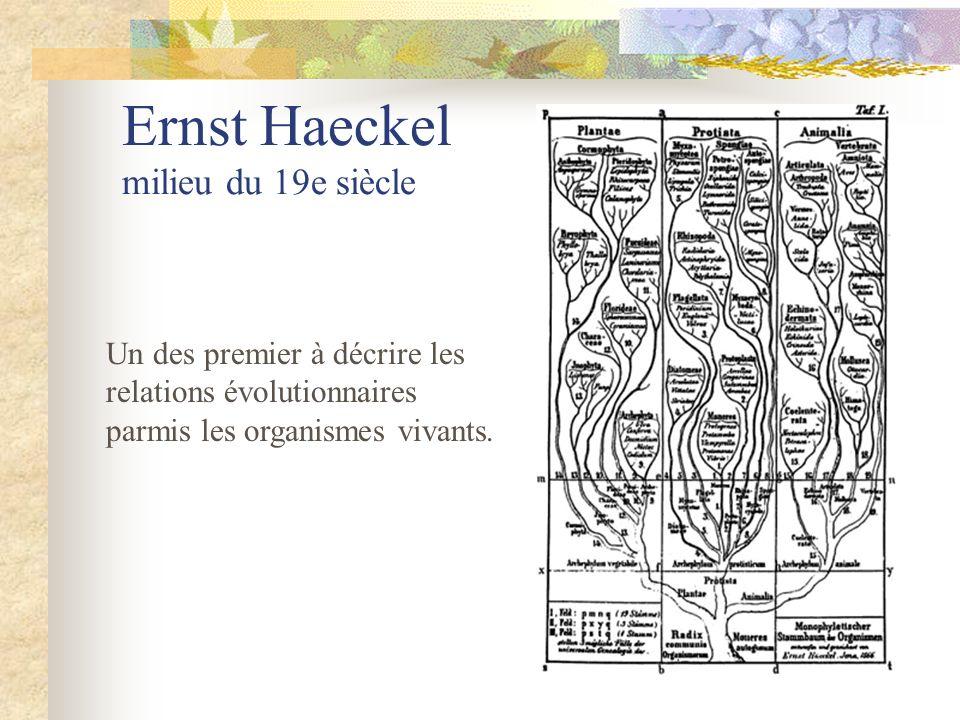 Ernst Haeckel milieu du 19e siècle Un des premier à décrire les relations évolutionnaires parmis les organismes vivants.